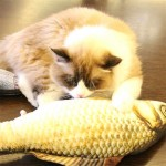 Simulation Fish Toy Funny Cat Toy Fish Stuff Scratching Post Board Toy, Middle Size: 41.0 x 13.5 x 9.0cm