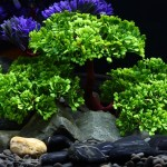 Décoration aquarium Artificielle Arbre Plant Figurines D'herbe Miniatures Fish Tank Paysage, Taille: 24,0 x 17,0 cm - Wewoo
